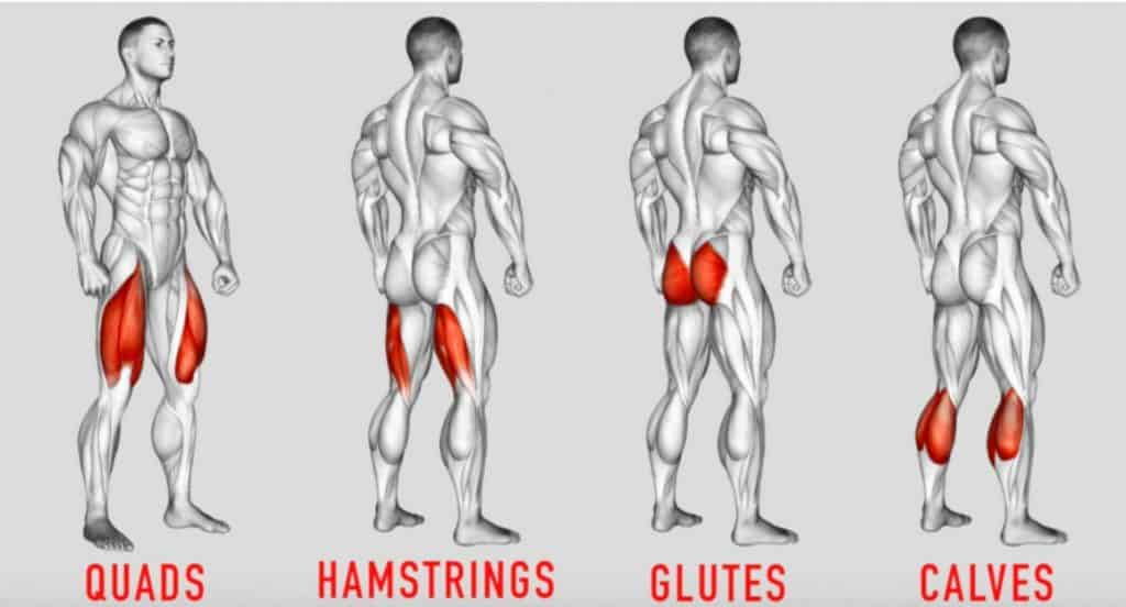 reverse-hack-squat-muscles-worked